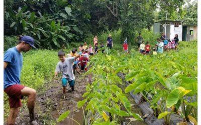 DAWSON Donates $5,000 for stewardship of Hakipu'u Lo'i Kalo